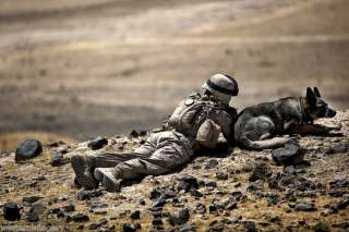US Marine Combat military working dog Afghanistan 2011
