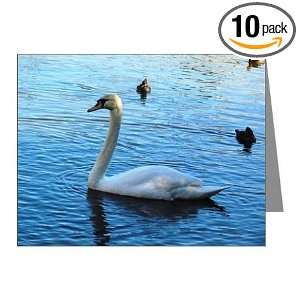 White Swan Blank Note Card (Set of 10) 4.25 X 5.5
