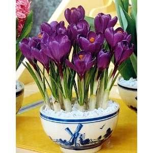 Delft Blue Ceramic Bowl Purple Crocus Bulbs Patio, Lawn & Garden