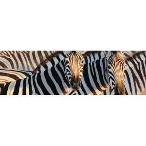Zebras   Glowing Dust Rear Window Decal Automotive