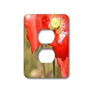 Patricia Sanders Flowers   New View Red Poppy Flowers   Light Switch