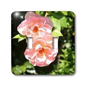 Sanders Flowers   Pretty Light Pink Roses Flowers Romantic   Light