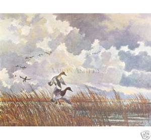 CANVASBACK DUCKS LANDING IN REEDS by Eric Sloane