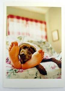 Greeting Card Get Well Sympathy Dog Funny Humor NEW