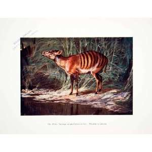 Harry Johnston Wildlife Art   Original Color Print