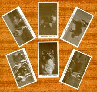SHETLAND SHEEPDOG SHELTIE 6 Named Dog Photo Trade Cards