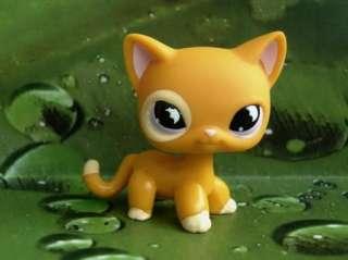 LITTLEST PET SHOP TANGERINE KITTY CAT #855