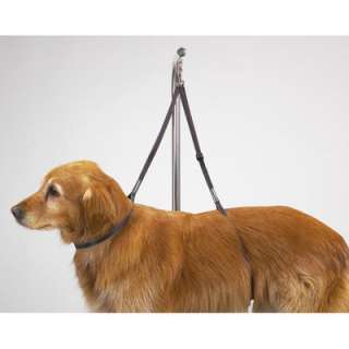 Top Performance Dog Nylon Table Harness  Wayfair